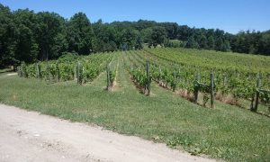 Central PA Winery and Brewery Tours - Vineyard Visit